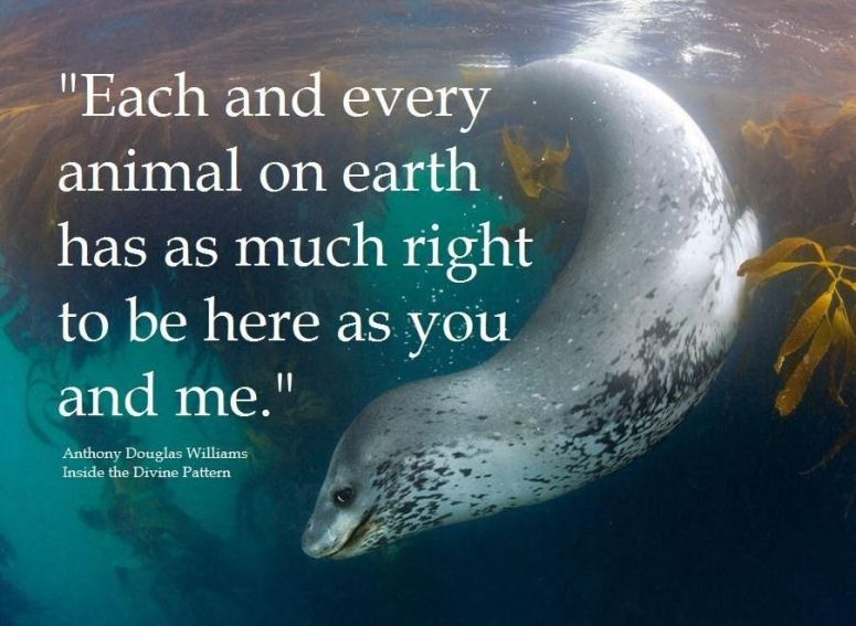 Sea Life Quote A D Williams