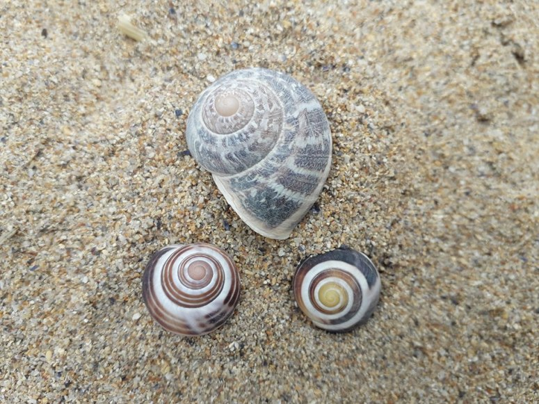 Periwinkle Shells on Sandy Beach Photo