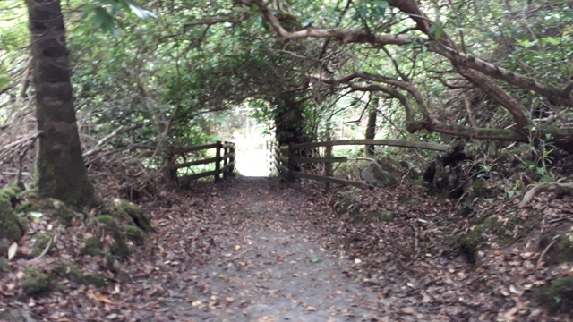 Arch Ways in Forest Photo Donegal Ireland