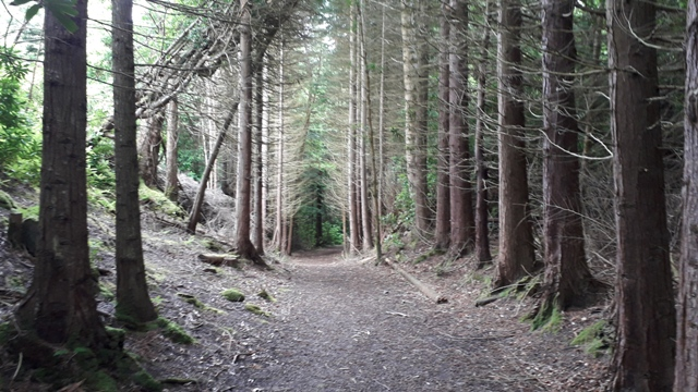 Forest Donegal Ireland
