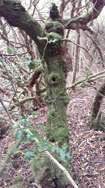 Magic Tree Donegal Ireland