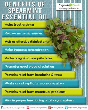 Spearmint oil benefits
