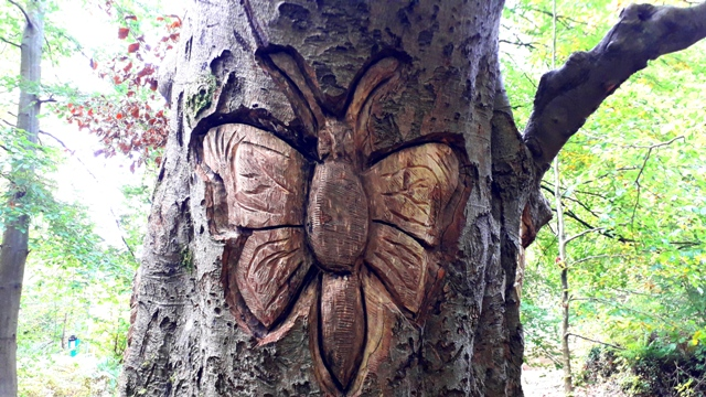 beautiful butterfly carving in tree 2019