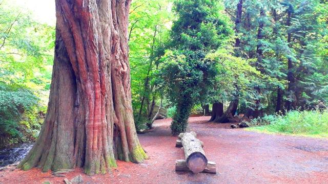 forest walk 2019