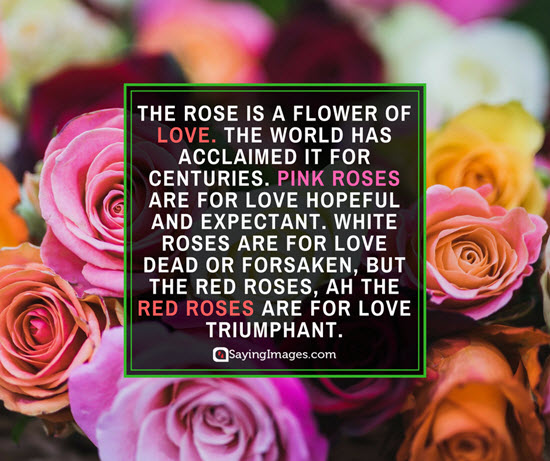 Red Pink and white Rose Symbology