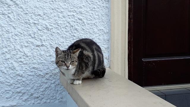 Sleepy Cat in Ireland