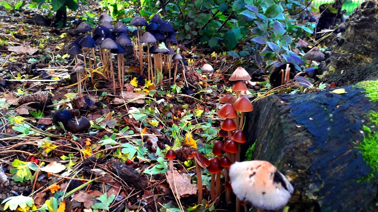 two-colonies-of-different-coloured-mushrooms-hippie