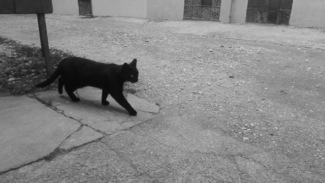 Black Cat Brasov