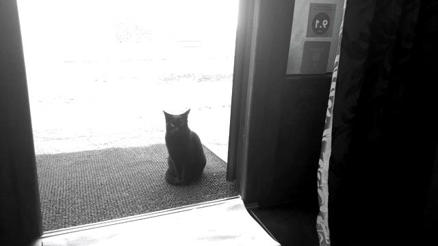 Black Cat Transylvania