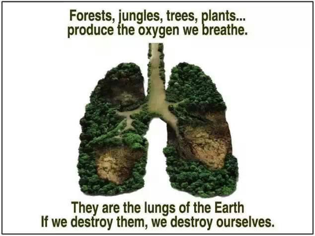 Trees are the lungs of the earth
