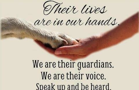 Be a voice for animals