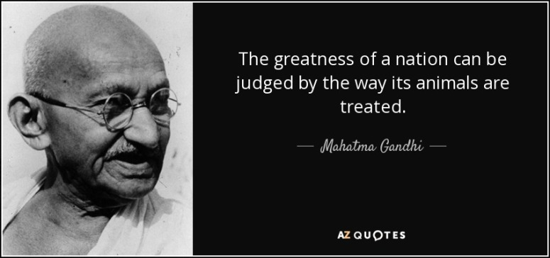 quote-the-greatness-of-a-nation-can-be-judged-by-the-way-its-animals-are-treated-mahatma-gandhi