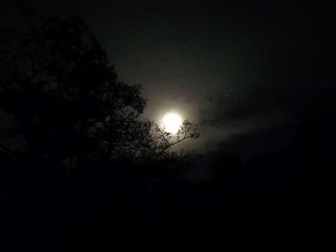 Tree holding Full Moon photo