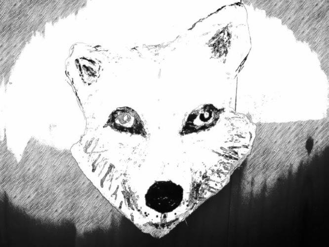 Wolf Moon Sketch